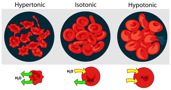 Figure 1. Diagram of osmotic pressure in blood cells