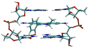 Figure 8. Molecular structure of ethidium bromide (EtBr) intercalated between two bases pairs