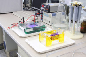 Figure 1. Electrophoresis running in the lab