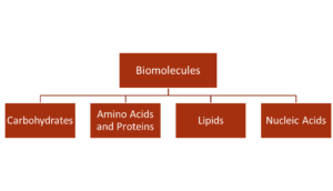 Classification of Biomolecules