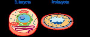prokaryotic and eukaryotic cell (source: NCBI)