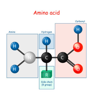 Figure 15. General structure of amino acid