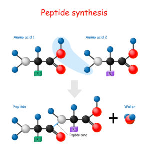 Figure 19. Peptide synthesis