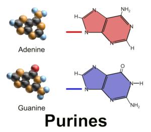 Figure 1. Purine