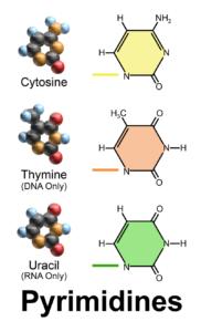 Figure 2. Pyrimidines