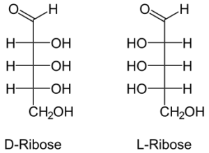 Figure 6. D and L Structures of Ribose