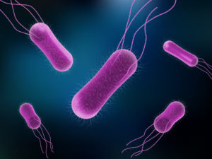 Vector illustration of Salmonella Bacteria