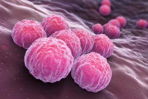 Figure 6. Chlamydia trachomatis, an obligate intracellular human pathogen