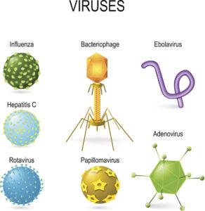 Vector illustrations of viruses: bacteriophage, ebolavirus, hepatitis, rotavirus, adenovirus, papillomavirus and influenza