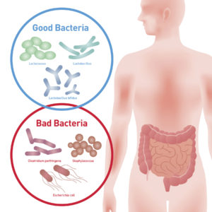 Useful Bacteria and harmful Bacteria (enteric bacteria, Intestinal flora, Gut flora, probiotics) image illustration
