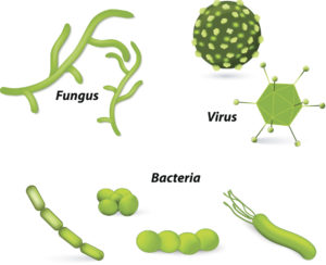 Microorganisms (Virus, bacteria and fungi)