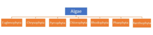 Figure 5. Classification of Algae