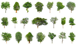 Figure 1. Tree Varities