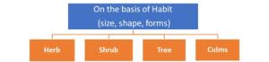 Figure 4. Types of plants based on their habit
