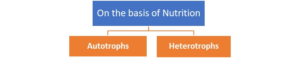 Figure 10. Types of plants on the basis of their nutrition