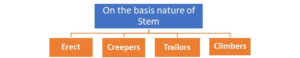 Figure 15. Types of plants based on their nature of stem