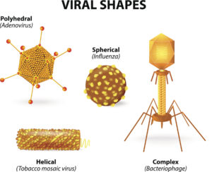 Figure 4. Various shapes and sizes of viruses