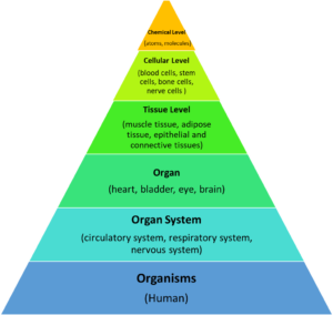 Figure 1. Organization of human body system