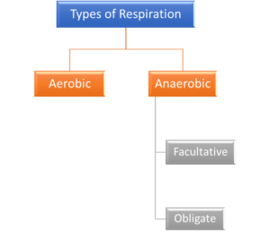 Figure 1. Types of respiration