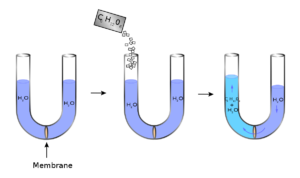 Figure 3. Diagram representing the process of osmosis