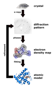 Figure 2. Structure determination by X-ray crystallography