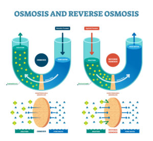 Figure 5. Osmosis and reverse osmosis
