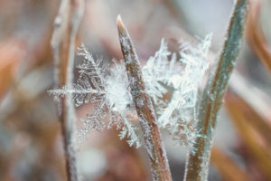 Figure 3. Small beautiful snowflake in the frozen grass
