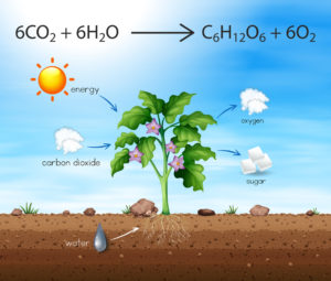 Figure 5. A chemical reaction involved in photosynthesis