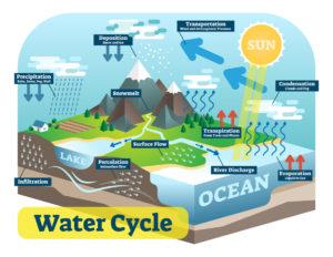 Figure 1. Water cycle