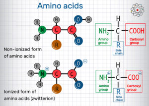 Figure 5. General formula of amino acids, ionized and non-ionized (zwitterion) forms